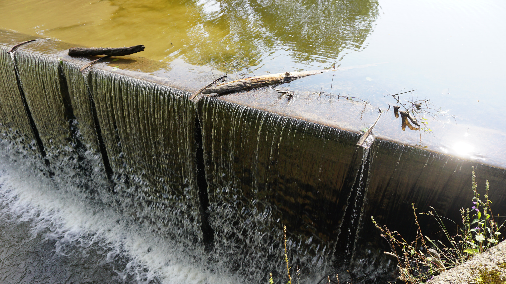 water cascades over a dam. Murky water is visible above the dam, with vegetation and other growth visible.