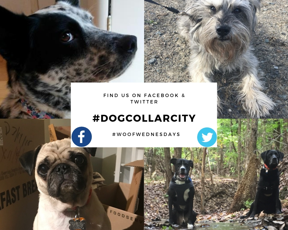 Social Media Promotion #dogcollarcity