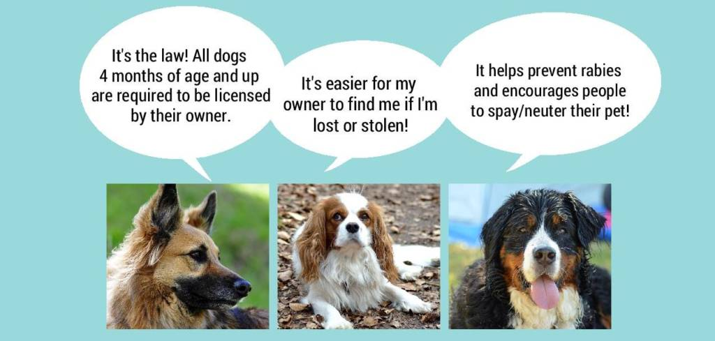 Dogs Talking About Licensing